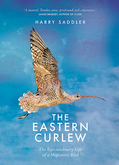 The Eastern Curlew Harry Saddler