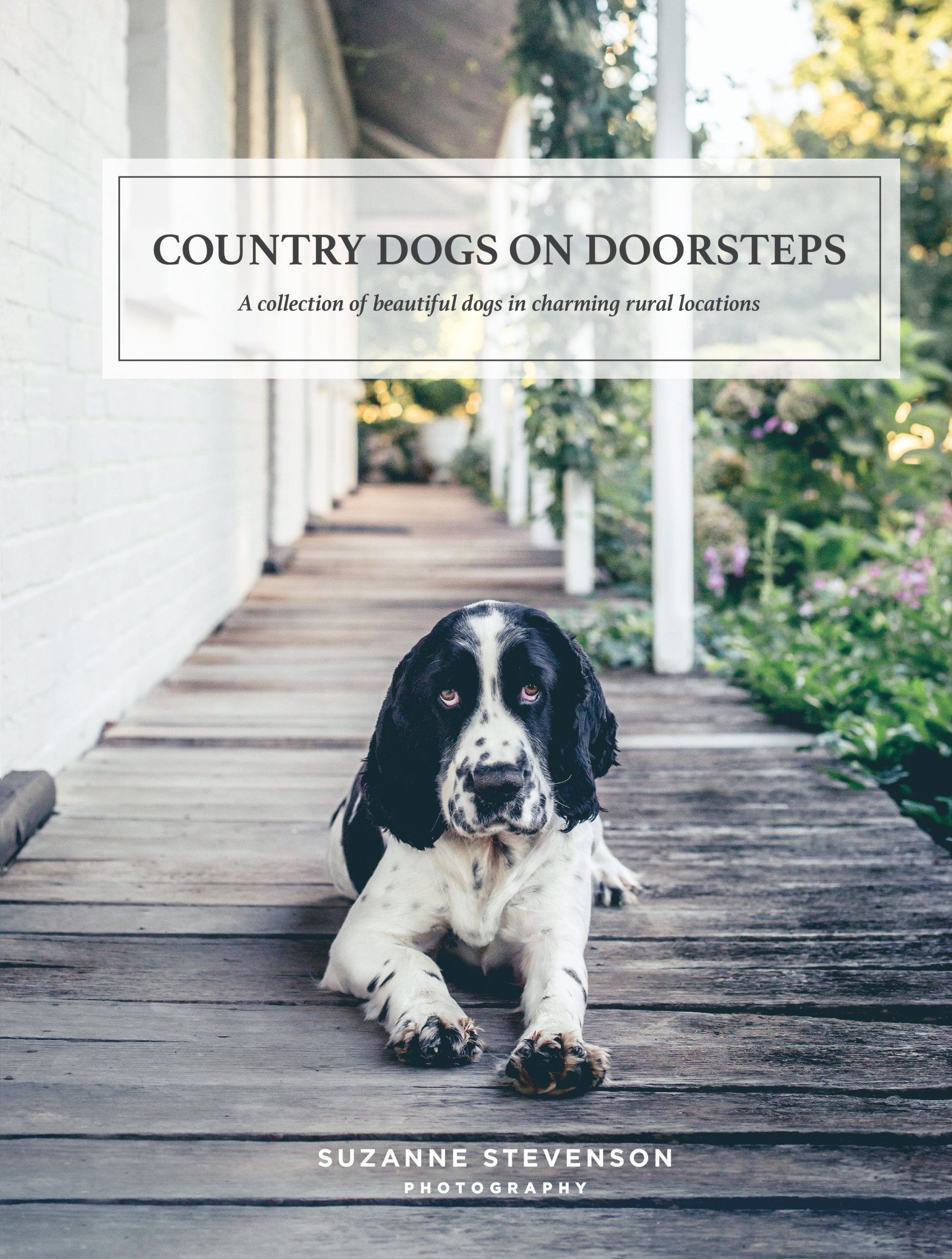 Country Dogs on Doorsteps by Suzanne Stevenson